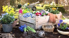 Gemüse vorziehen, Rasen aussäen oder Stauden pflanzen: Jeden Monat gibt es im Garten etwas zu erledigen. Ein Überblick mit den wichtigsten Tipps, nach Monaten sortiert.