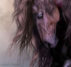 Equus by cwrw on deviantART