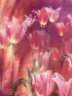 Title: Tall Tulips  Artist: Carol Cavalaris  Medium: Mixed Media - Paintings