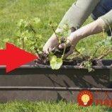 Nedávajte muškáty len do okien či na balkón: Pestovatelia ukázali úchvatné nápady, ako pestovať obyčajné muškáty – toto stokrát zvýrazní ich krásu!