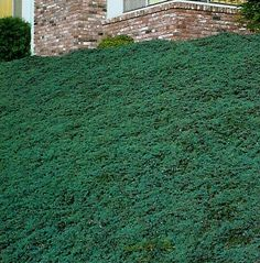 Front Yard Landscaping Blue rug juniper would also work on my sloped front yard. Sloped Front Yard, Front Yards, Landscaping On A Hill, Landscaping Ideas, Steep Hillside Landscaping, Farmhouse Landscaping, Modern Landscaping, Outdoor Landscaping, Yard Design