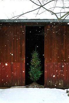 Barn Christmas Tree
