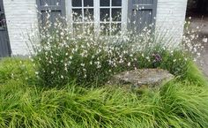 I love how long-blooming gaura is. I love the boulder and the softness of the forest grass.