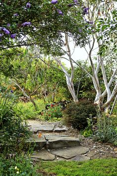 Rustic steps, which Cathy made herself from local stone, pass under a row of dwarf snow gums.  Cathy Gillespie-Jones' lovely garden at North Burnima, NSW
