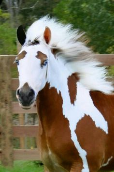 Unique paint!!  Eyebrows, dark muzzle and two different colored ears!  Would love to see this horse as adult.