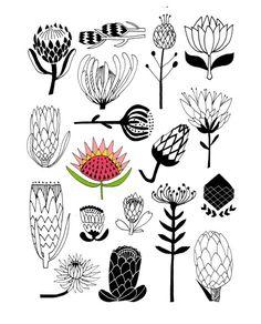 Flower illustrations for art journals and creative scrapbooks Protea Art, Protea Flower, Flowers, Art Floral, Motif Floral, Art And Illustration, Flower Illustrations, Illustration Botanique, Abstract Oil