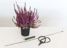 Du trenger 1-2 lyngplanter, en god saks og ståltråd.