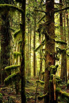 Olympia National Forest Twilight Forks Washington by MScottPhotography #Twilight  #Olympia