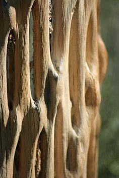 saguaro ribs by lars hammar, via Flickr