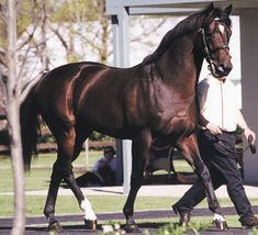 Fusaichi Pegasus-2000 Kentucky Derby winner