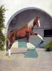 W. K. Kelloggs Arabian Horse Ranch by Svadilfari on Flickr.