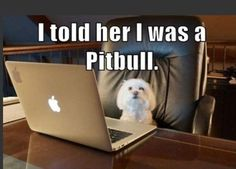 Dump A Day Attack Of The Funny Animals - 30 Pics