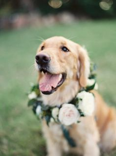 dog collar with flowers, wedding day. Hawaiian Wedding at Loulu Palm Estate