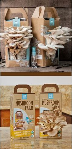 Check out our Mushroom Farm Transformation!  Your family will love unwrapping Mushroom Farm to grow their own oyster mushrooms! Makes delicious meals and grows from the box in just 10 days!