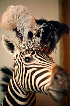 Well hello there #zebra