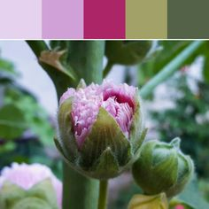 《Pink Bud Palette》