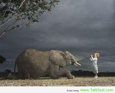Friend Elephant amazing picture