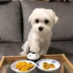 Home - Pets or Animals Cute Funny Animals, Cute Baby Animals, Animals And Pets, Cute Dogs And Puppies, Baby Puppies, Doggies, Funny Dog Videos, Funny Dogs, Animal Antics