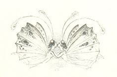 """British Library digitised image from page 23 of """"Midsummer Eve: a fairy tale of love"""" Faerie Tattoo, Fairy Sketch, Alien Tattoo, Botanical Tattoo, Little Doodles, Anime Tattoos, British Library, Minimalist Art, Faeries"""