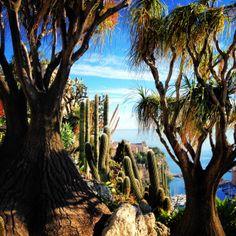The Exotic Garden - Monaco