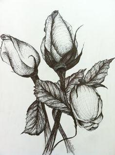 mushroom drawings pencil | Tina Cargile Illustration: Pencil Drawings