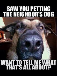 Neighbours dog