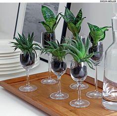 Ideia de arranjo de mesa para um jantar: as taças de licor ganharam exemplares de espadinha e minissuculentas, assim não atrapalham as conversas entre os convidados. A montagem ficou a cargo do paisagista Odilon Claro, da Anni Verdi.