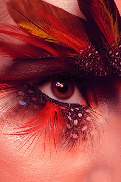 Red creative design:: eye, feather