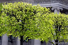 Bright green trees in Dublin