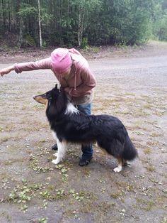 Amorwood's Joy n'Special: 10kk Rough Collie Puppy, Collie Puppies, Corgi, Joy, Animals, Corgis, Animales, Border Collie Pups, Animaux