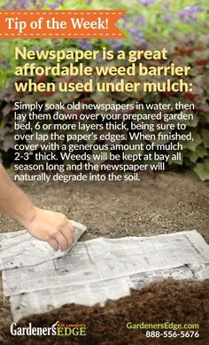 Gardening Tip: Using newspaper as a weed barrier is a great low-cost option for gardeners! When using newspaper to prevent weeds, remember to lay the paper once it is damp, use several layers, and cover with mulch or soil to… Continue Reading → Organic Gardening, Gardening Tips, Vegetable Gardening, Beginners Gardening, Gardening Courses, Flower Gardening, Gardening Supplies, Indoor Gardening, Container Gardening