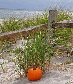 Autumn at the Beach This year's Thanksgiving theme!