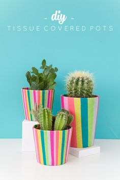 DIY Tissue Covered Pots