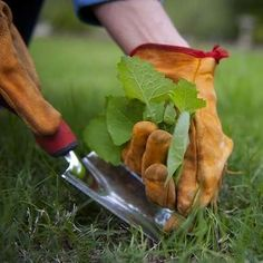 9 Natural Ways to Kill Weeds