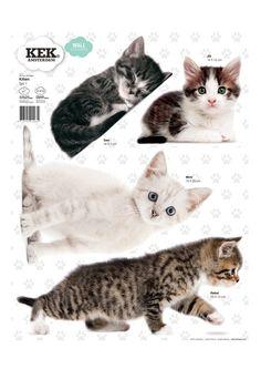 Kittens Set 1 muursticker | KEK Amsterdam
