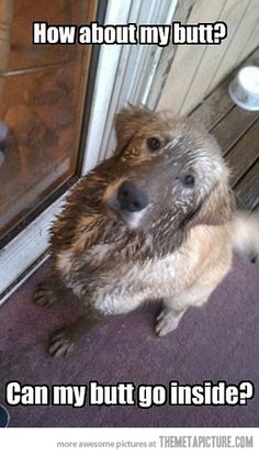 Oh that sweet and muddy face, hard to say no to. ;)
