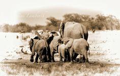 Elephants at waterhole, Etosha, Namibia Elephants, The Darkest, Wildlife, Africa, Doodles, Sketches, Photos, Animals, Drawings