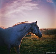 25% off with SUMMER25 code at checkout through Aug. 31! - Sunny the Horse Lomography Photograph by PictureBook on Etsy #lomography #film #analog #photography #horse #dianamini #35mm #sale #texas