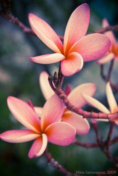 http://orig02.deviantart.net/bf26/f/2009/322/a/c/thai__flowers_by_samsonova.jpg