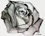Mother Rose Print by Andrea Realpe