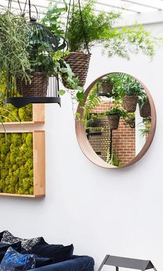 Plants don't just look pretty – they also clean the air, keep you calm and even help you sleep. Bring the outdoors in with these green bedroom design ideas. All Plants, Indoor Plants, House Plants, Green Bedroom Design, Ficus Microcarpa, Human Environment, Bedroom Plants, Chelsea Flower Show, Outlet