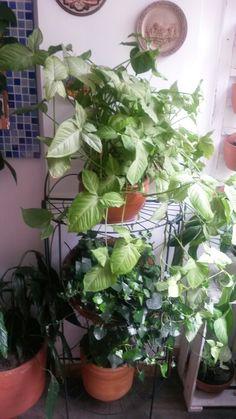 Jardínes  interiores