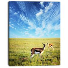 "DesignArt 'Antelopes Wandering Under Bright Sky' Photographic Print on Wrapped Canvas Size: 20"" H x 12"" W x 1"" D"