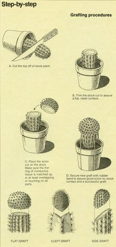 """ The World of Cactus & Succulents (1977) B-D """