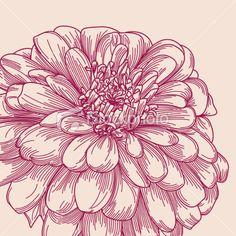 Antique Zinnia Flower Royalty Free Stock Vector Art Illustration