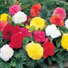 Inspirational Sie haben nicht sehr viel Licht im Garten und wollen deswegen tolle Schattenpflanzen finden die Ihnen dennoch viele Farbenfreude bringen Sie haben eine