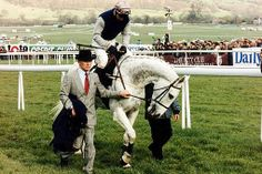 """Dessert Orchid, otherwise known as """"Dessie"""", was an English racehorse  best known for his iron will, versatility, and his front-running attacking style.   This guy was well loved by his supporters, and was rated the 5th best National Hunt Horse of all time by Timeform.  Check out some other great horses from history:  http://central.parellinaturalhorsetraining.com/2013/08/the-wonder-of-the-horse-seven-great-horses-from-throughout-history-2/"""