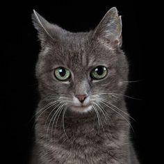 Animal Souls – Robert Bahou capture la personnalité des animaux (image)
