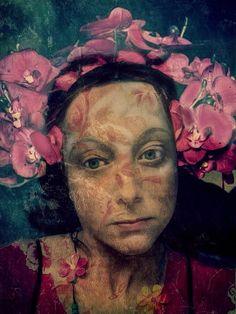 Orchids, Sarah Jarrett