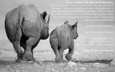 """man alone suffers a paralyzing fear that no other creature endures. A fear of time running out."""" ― Mitch Albom, The Time Keeper Love Me Quotes, Great Quotes, Awesome Quotes, Inspirational Quotes, Save The Rhino, Mitch Albom, Most Famous Quotes, Time Running Out, Say That Again"""